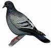 Птицы населенных пунктов